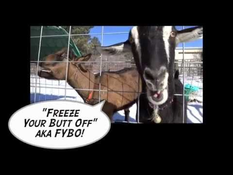 "QRP Ham Radio Contest ""FYBO"" (Freeze Your Butt Off) 2015"